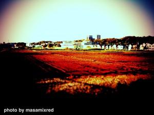 夕方の田園